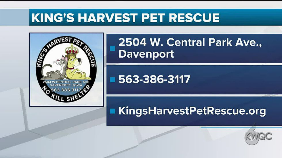 King's Harvest Pet Rescue in Davenport, IA, celebrates 6th year of operation.