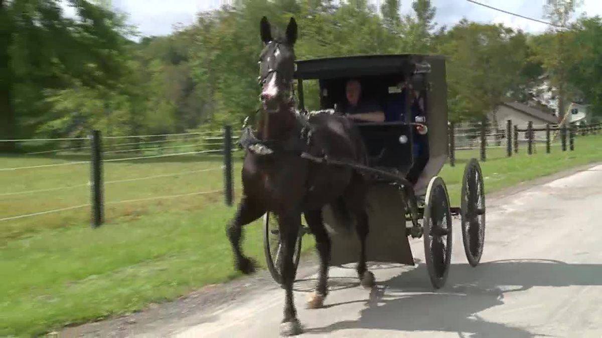 Police are looking for two Amish men who jumped out of their buggy and ran when an officer...