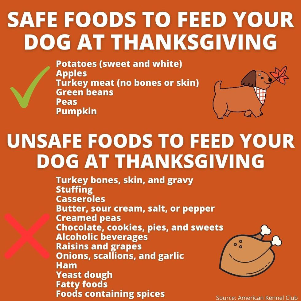 Safe and unsafe foods for dogs at thanksgiving