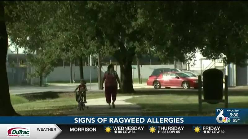 Ragweed allergies