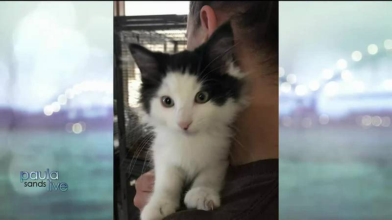 QC Paws shelter is offering a $10 pet adult adoption special through July 19. But adorable...