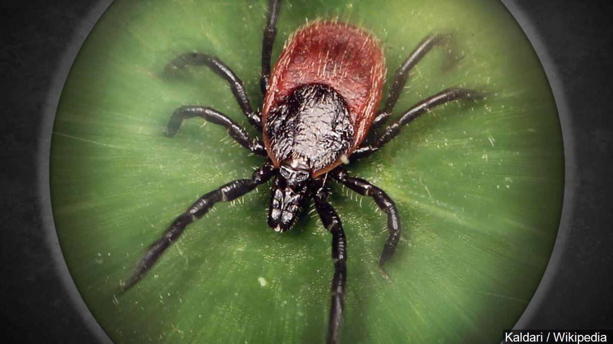 CDC issues a warning about ticks this year as tick-related diseases are on the rise.