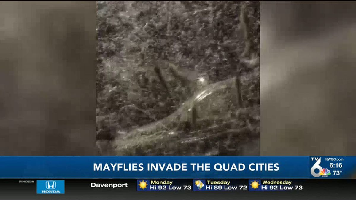 An incredible video showing what looks like hundreds of thousands of mayflies filling the skies along the Mississippi River. (KWQC)