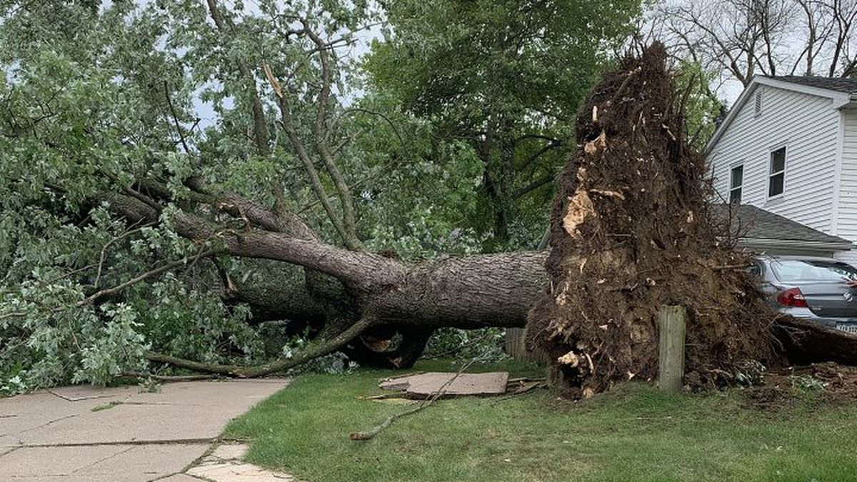 Tree completely up rooted in Bettendorf.