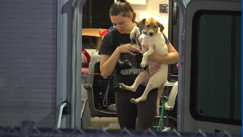There are about 120 dogs and 30 cats homeless after the devastating Hurricane Ida, hoping to...