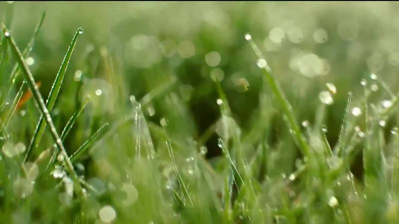 TV6 Meteorologist Kevin Phelps explains why it smells after it rains