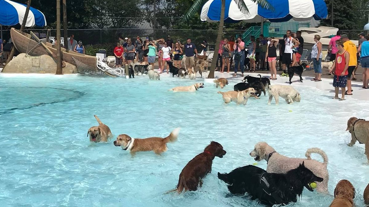 The 2021 Doggy Splash is Sunday, August 29th starting at 11:00 a.m. Pre-registration is...