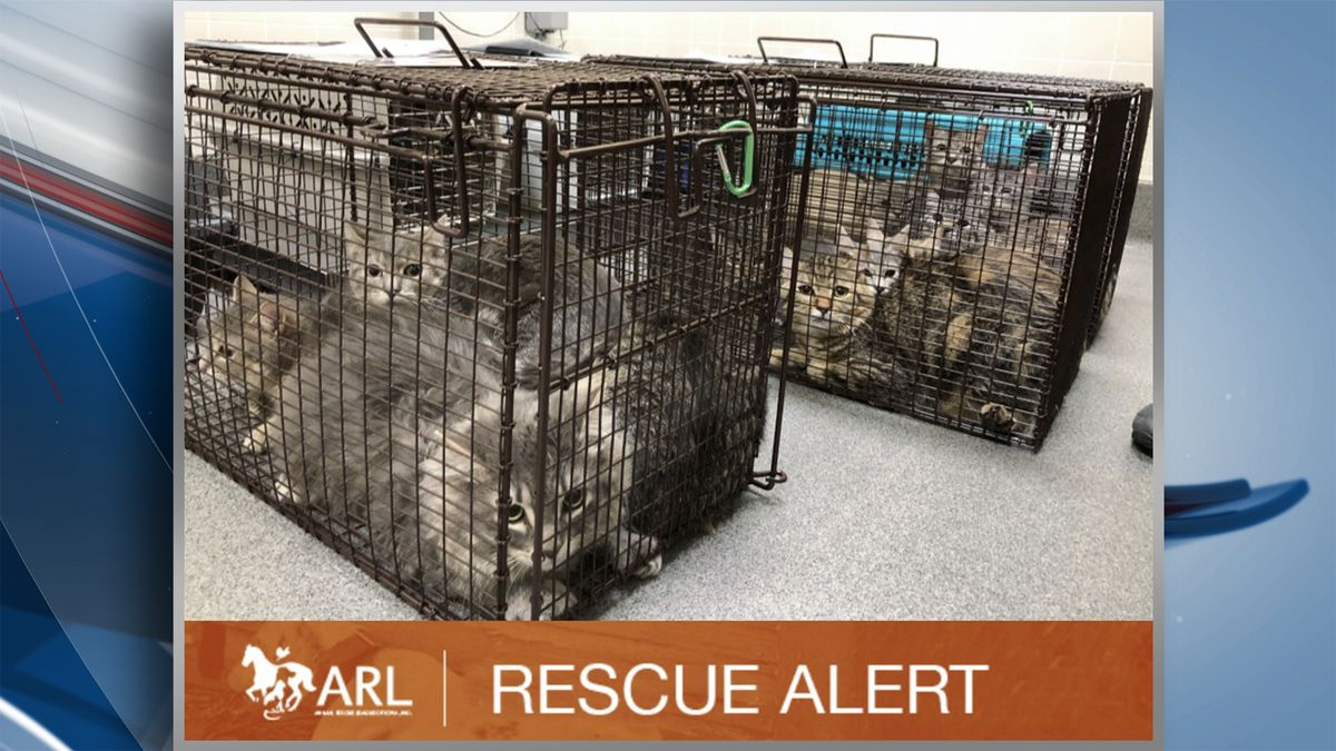 Over 70 cats have been rescued from a home in Des Moines according to the Animal Rescue League of Iowa. Officials posted to Facebook on Tuesday saying their mobile rescue team was on the scene to rescue the cats from a hoarding situation. (KWQC/Animal Rescue League of Iowa)