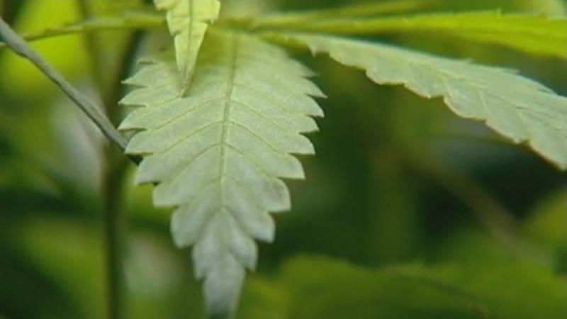 Marijuana tax funds in Illinois