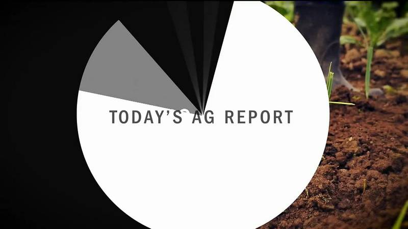 Ag report Maple trees