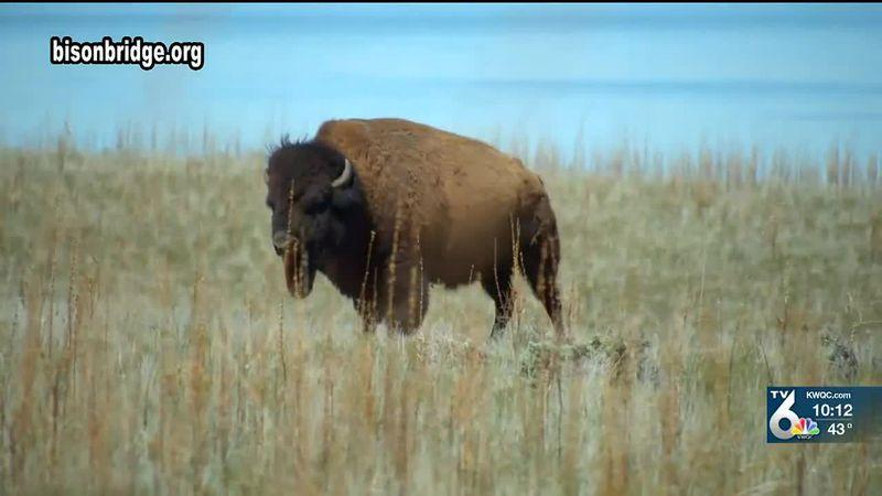 Chad Pregracke announces plans for a Bison Bridge.