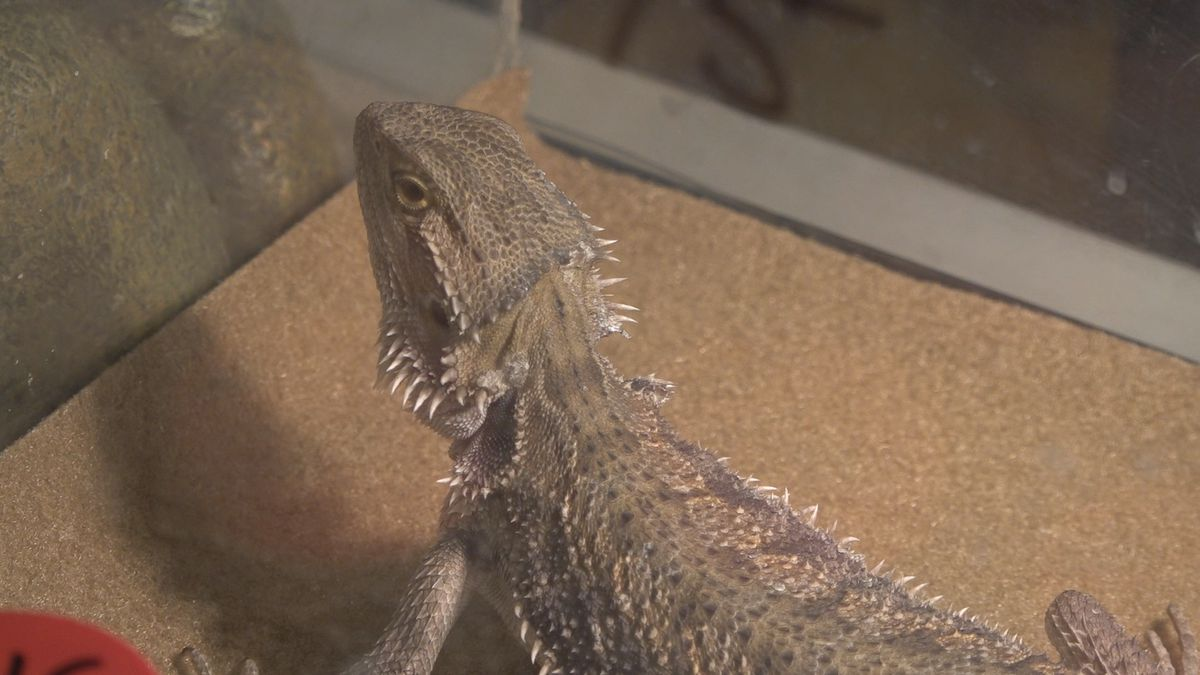The Show Me Reptiles and Exotics show had an event in Davenport on Sunday. (KWQC)
